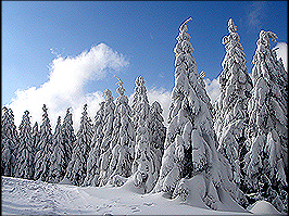 Winterlandschaft am Rennsteig