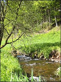 Bachlauf im UNESCO-Biosphärenreservat Vessertal