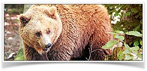 Alternativer Bärenpark Worbis