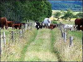 Landschaft Crawinkel Thüringen
